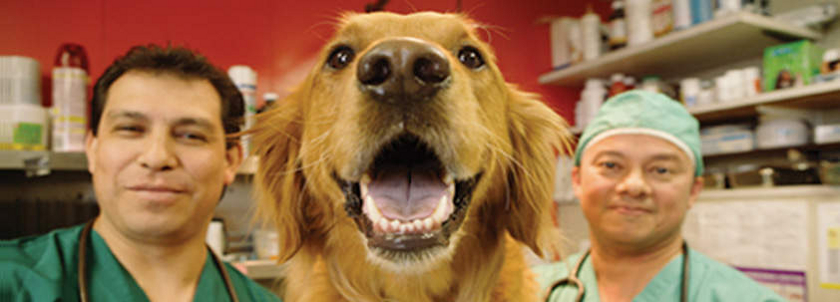 Animal Licensing Made Easy - PetData, Inc